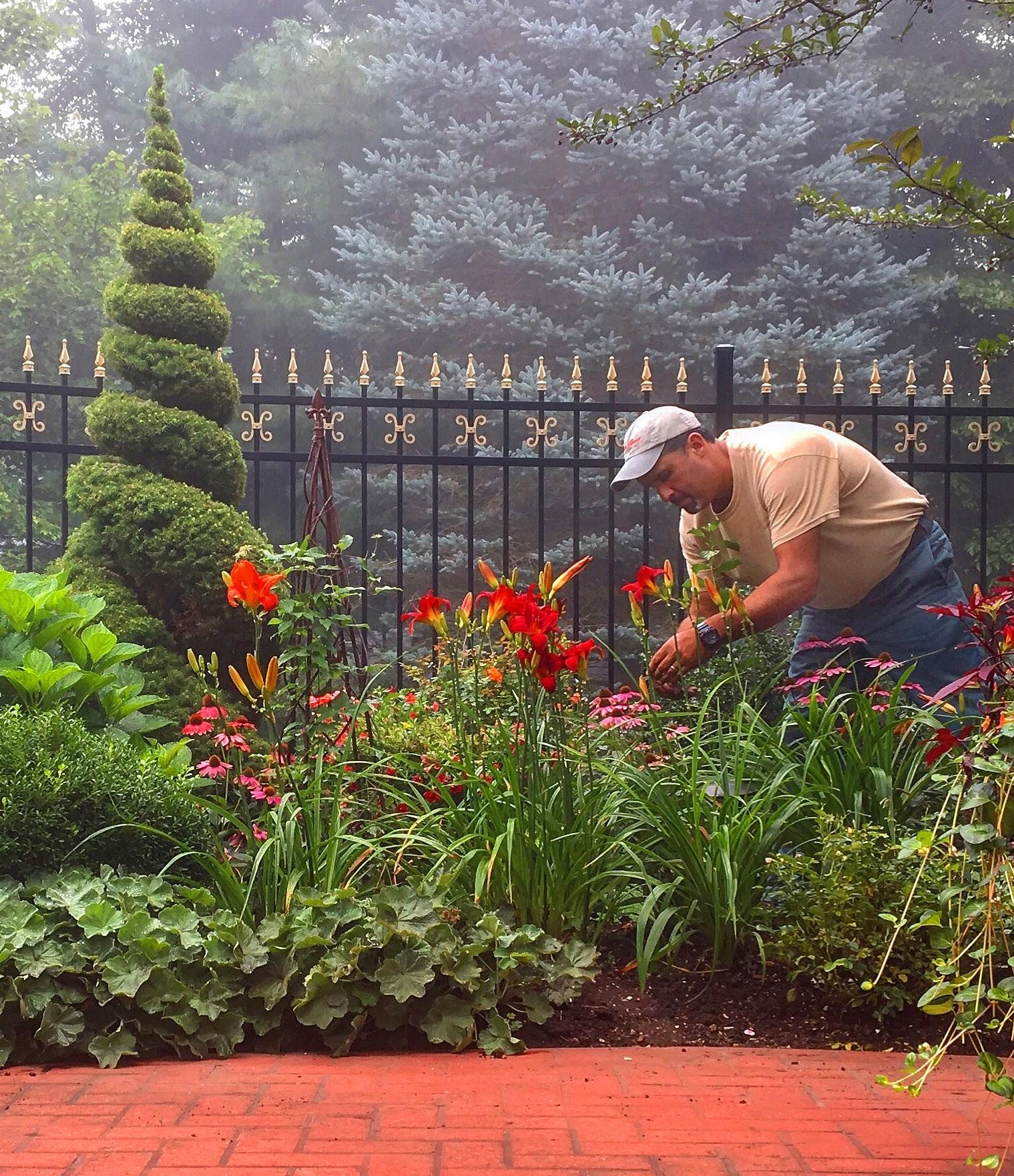 Paul Camara maintaining flowers