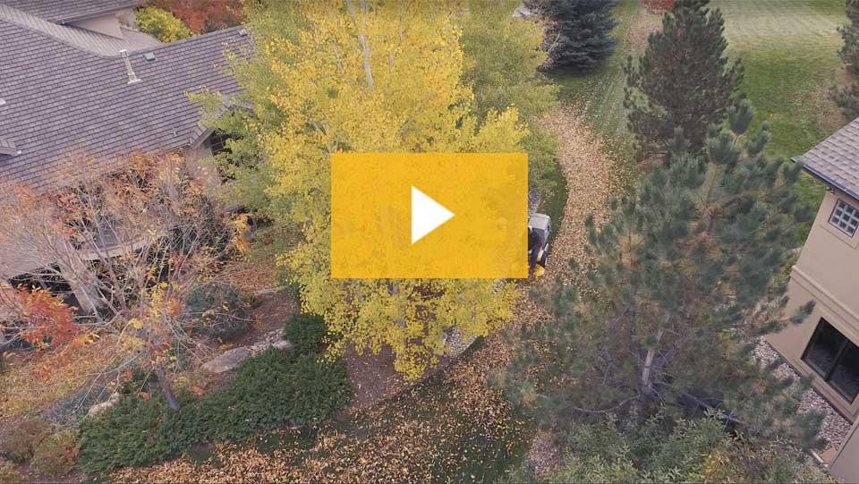 Leaf Cleanup Video